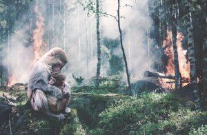 Waldrodungen im Amzonas
